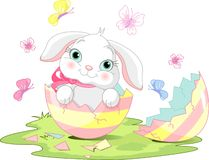 Easter bunny surprise Stock Image