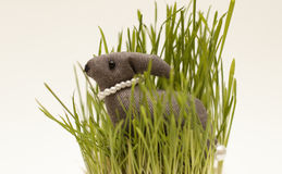 Easter bunny. Toy easter bunny in the grass Stock Images