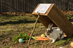 The Easter Bunny Stock Photography