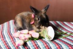 Easter Bunny tulips Stock Image