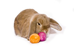 Easter bunny with two eggs Stock Photography
