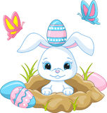 Easter bunny. Vector illustration of cute Easter bunny peeking out of a hole Royalty Free Stock Image
