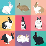 Easter Bunny vector Rabbits set colorful retro style Stock Photos