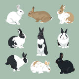 Easter Bunny vector Rabbits set retro style. Easter Bunny vector illustration  Rabbits set in retro color style Stock Photos