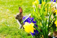 Easter bunny waiting on meadow Stock Photos
