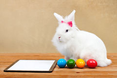 Easter bunny waiting for online orders Stock Photos