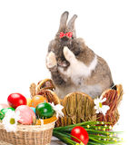 Easter bunny washes Stock Images