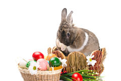 Easter bunny washes Royalty Free Stock Photography