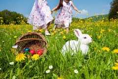 Easter bunny watching the egg hunt Royalty Free Stock Image