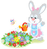 Easter Bunny watering flowers. Little rabbit watering flowers on a flowerbed in a garden Royalty Free Stock Image