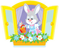 Easter Bunny watering flowers Stock Photo