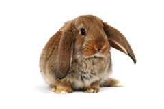 Easter bunny on white background Royalty Free Stock Photos