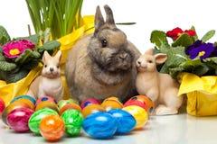 Easter Bunny among yellow daffodil, Easter flowers Stock Image