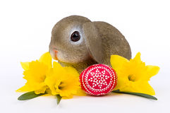 Easter bunny with yellow Daffodils and artistic Easter egg Royalty Free Stock Photos