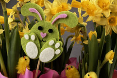 Easter bunny and yellow daffodils. Stock Photography