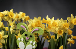 Easter bunny and yellow daffodils. Stock Photo
