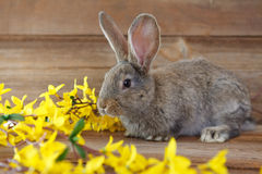 Easter bunny. Between yellow flowers royalty free stock image