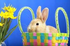 Easter bunny and yellow tulips Stock Photo