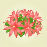 Easter cactus vector Royalty Free Stock Images