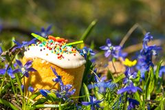 Easter cake in the flowering spring garden Stock Photography