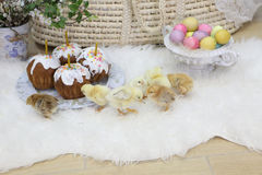 Easter cakes, colored eggs and live chickens Stock Photography
