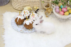 Easter cakes, colored eggs and live Chicks and Bunny. Live Bunny and Chicks and Easter cakes and painted eggs Royalty Free Stock Image