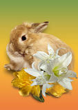 Easter card. Bouquet of spring flowers in a gift from a lovely rabbit. Easter card Stock Photos