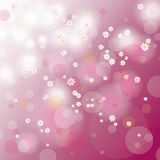 Easter Card Background Cherry Tree Flowers Royalty Free Stock Photography
