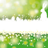 Easter Card Background White Grass Rabbit Flower C Royalty Free Stock Images