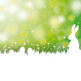 Easter Card Background White Grass Rabbit Royalty Free Stock Photos