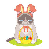 Easter card with a basket and a cat Royalty Free Stock Photography