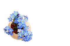 Easter card with blue spring flowers in eggshell Stock Photos
