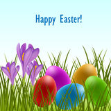 Easter card with crocus and eggs Royalty Free Stock Images