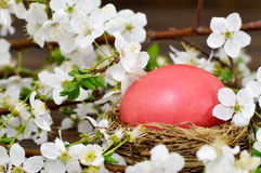 Easter card with Easter egg  in the nest and spring flowers Royalty Free Stock Photography