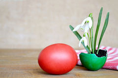 Easter card: Easter egg and spring flowers in eggshell Stock Photos