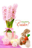 Easter card: Hyacinth in a cup Royalty Free Stock Photo