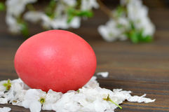 Easter card with red Easter egg in the nest and spring flowers Royalty Free Stock Images