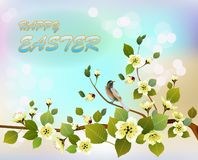 Easter card with  spring flowers royalty free stock photos