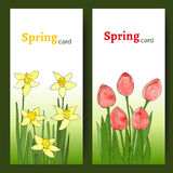 Easter cards with spring flowers (tulips and daffodils). Royalty Free Stock Images