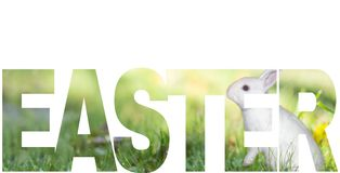 Easter cards with white rabbit on green grass in a sunny day stock images