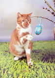 Easter cat Stock Photography
