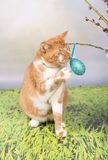 Easter cat Royalty Free Stock Photo