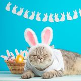 Easter cat with bunny ears with Easter eggs. Cute kitten royalty free stock photos