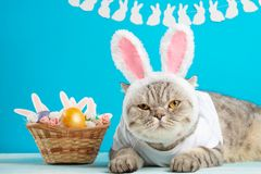 Easter cat with bunny ears with Easter eggs. Cute kitten royalty free stock image