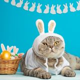 Easter cat with bunny ears with Easter eggs. Cute kitten royalty free stock images