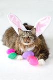 Easter cat with eggs Royalty Free Stock Image