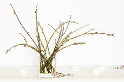 Catkin in a glass wase. Royalty Free Stock Photography