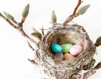 Easter Celebration: Real Bird Nest Full of Easter Egg Candies Stock Photography
