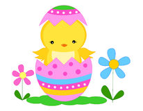 Easter chick. Cute little easter chick coming out from a colorful easter egg illustration isolated on white background