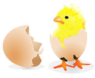 Easter chick. Easter lillte yellow chick illustration Royalty Free Stock Image